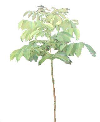 ForestryFreshlyPlanted500