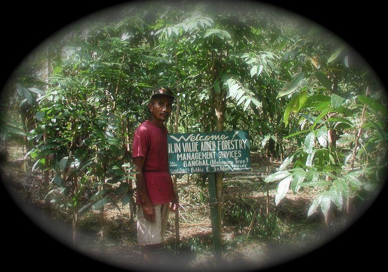 ForestryBobby112903 (4)